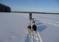 Dog sledding expedition in South-Estonian wilderness